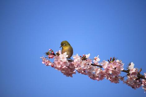 170304flower_garden05