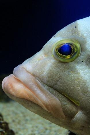 170624fish_eye02