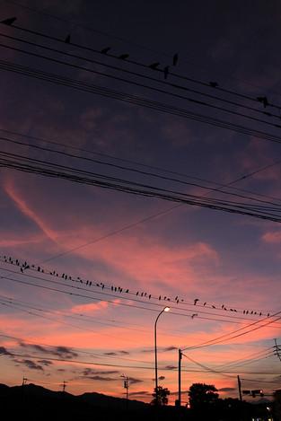 170804crow_flock02