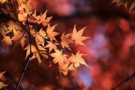 171202late_autumn02