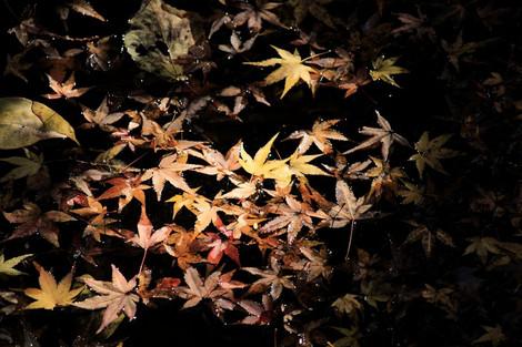 171202late_autumn03