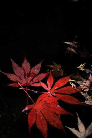 171202late_autumn12