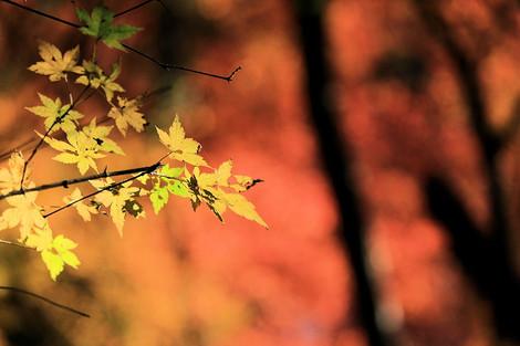171202fallen_leaves02