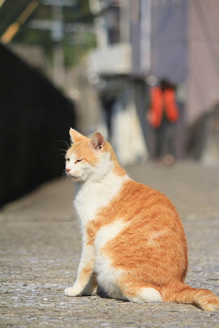 181111cats01