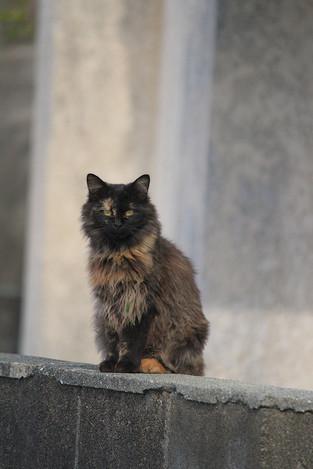 181111cats02