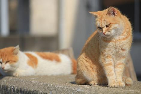181111cats03