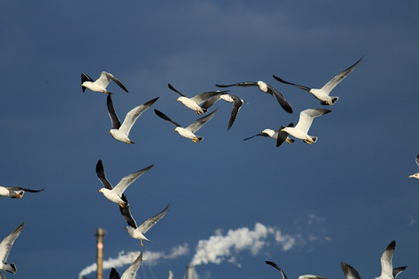 181230birds02