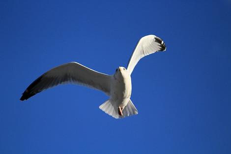181230birds03