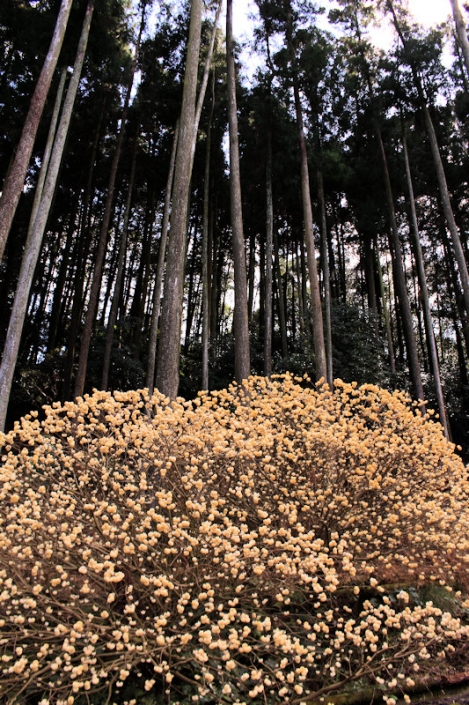 200308forest02