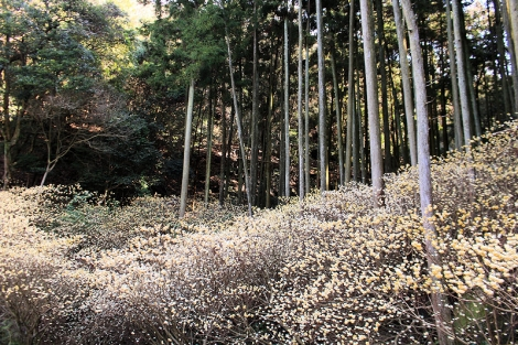 200308forest03