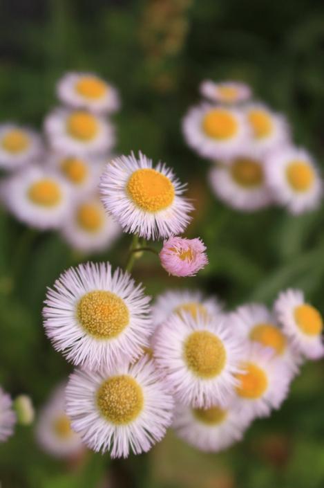200506flowers09