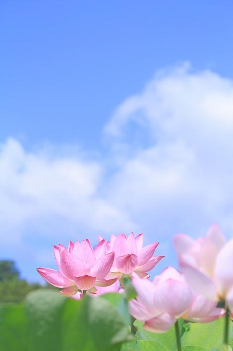 200702flower01